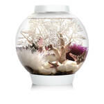 Biorb Aquarium Cube 30 Mcr - Aquaria - 30 l Transparant